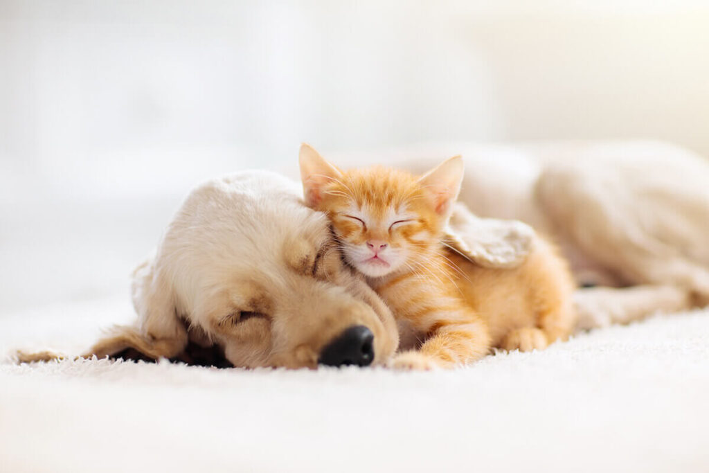 A canine and a feline leaning on each other