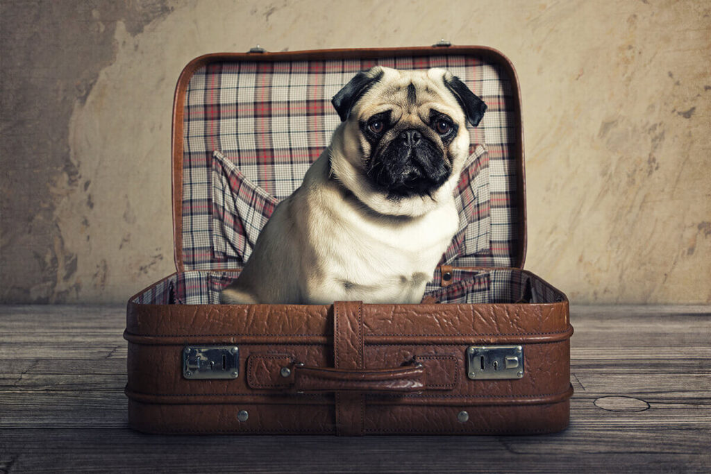 A canine in a suitcase